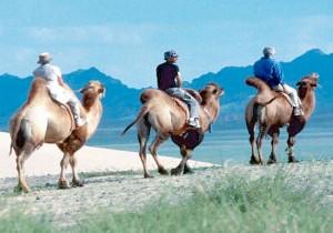 Дикая Монголия