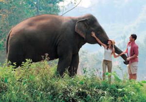 В Королевстве белого слона