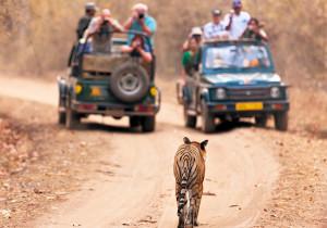 Тропой тигра <br /> (Индивидуальный тур)