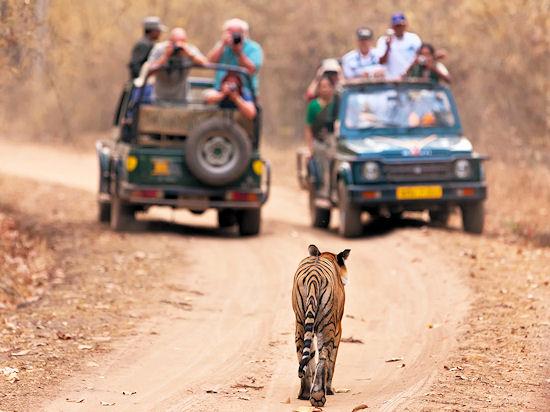 Тропой тигра