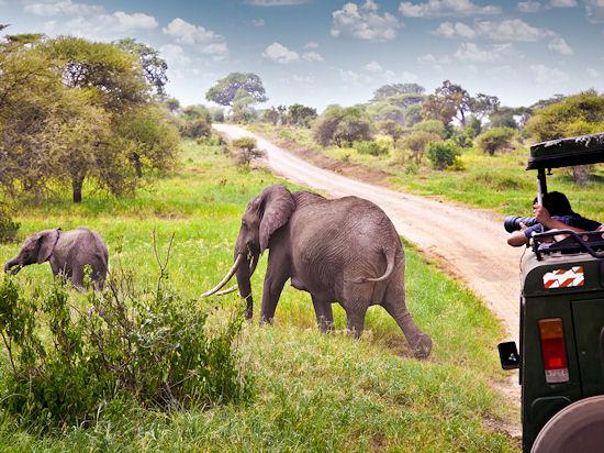 Танзания — сафари-люкс