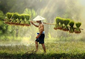 Открытие северного Вьетнама (Индивидуальный тур)