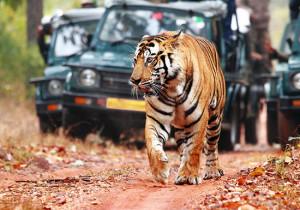 Сафари по джунглям Индии <br /> (Групповой тур)