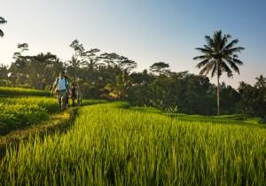 Открывая Бали <br /> (VIP путешествие) <br /> 13 дней/12 ночей