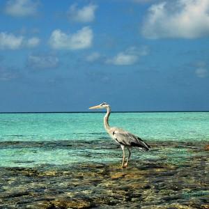 Мальдивские острова_71