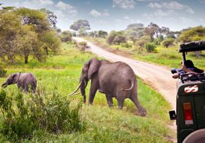 Танзания — сафари-люкс <br /> (VIP путешествие) <br /> 6  дней/5 ночей