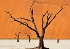 В песках Намибии <br /> (VIP путешествие) <br /> 11 дней/10 ночей