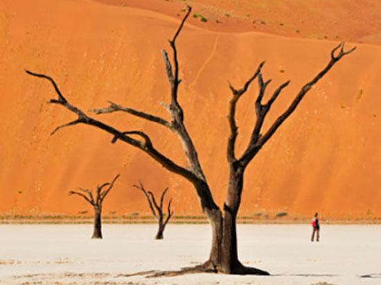 В песках Намибии1